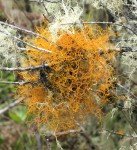 That's about as orange as lichen gets!