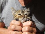 kitten with stunted growth but plenty of love to give